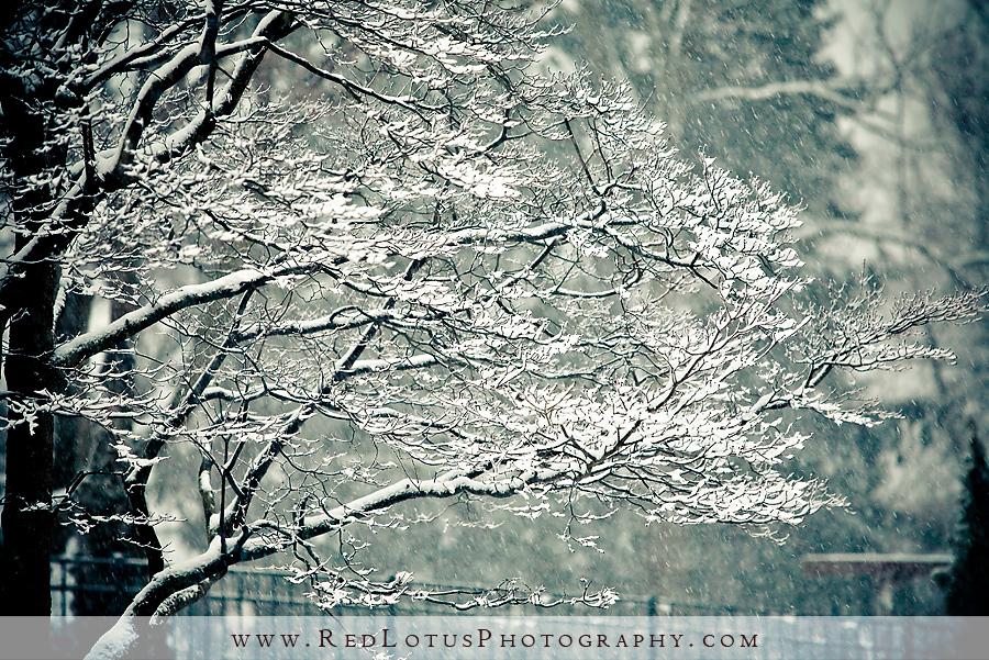 20100205-snow-005
